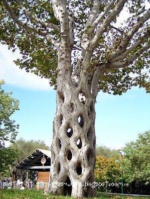 Jalinan pokok